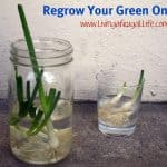 Regrow Your Green Onions