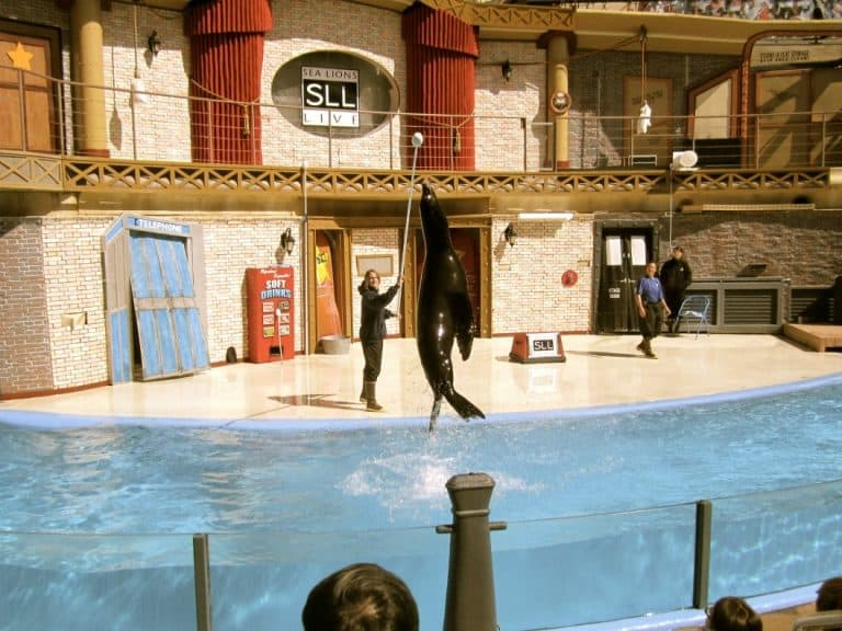 My Favorite was the Sea Lion!!!