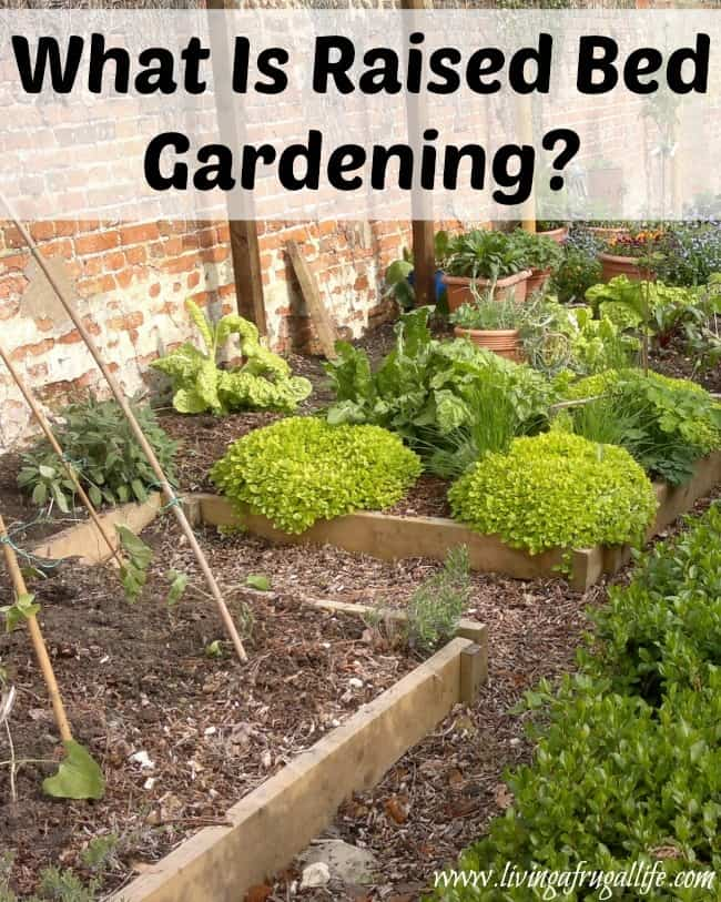 Find out what raised bed gardening is and why it is beneficial to have in many situations. This is a great vegetable or flower garden for small spaces.