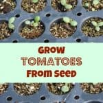 grow tomatoes from seeds #gardening