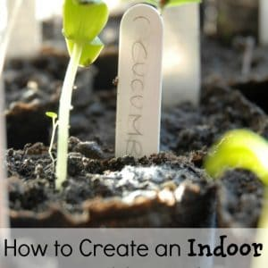 make an indoor vegetable garden with these 4 simple tips