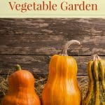 Preparing your fall garden can be easy with these tips!