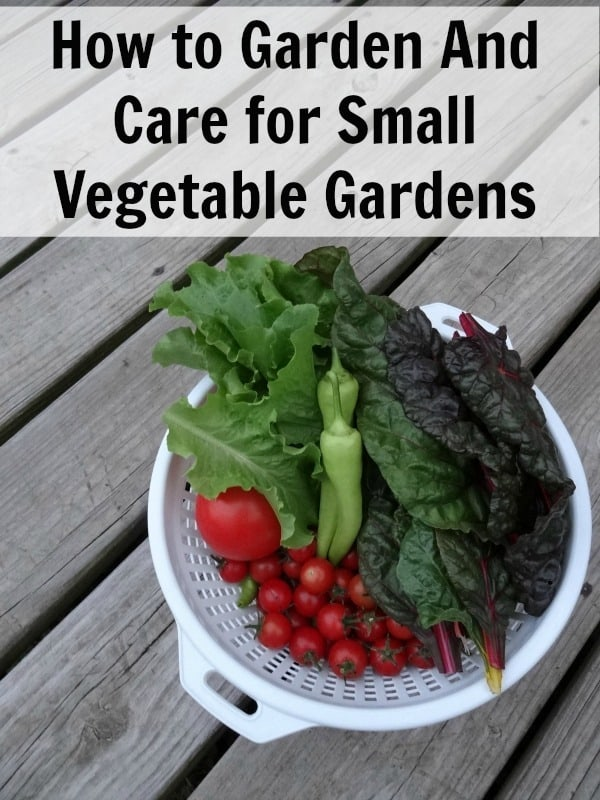Learn how to garden in small vegetable gardens. Includes how to care for small vegetable gardens, what containers to use and more!