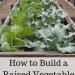 Learn how to make a raised vegetable garden that you can make on any budget or with any space you have available.  Includes instructions and tips for success