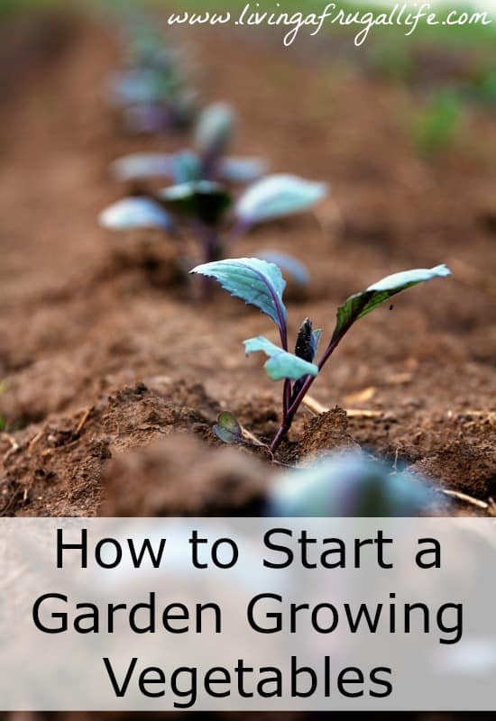 Are you trying to learn how to start a garden growing vegetables? Learn step by step instructions to start a garden and how to get the most vegetables.