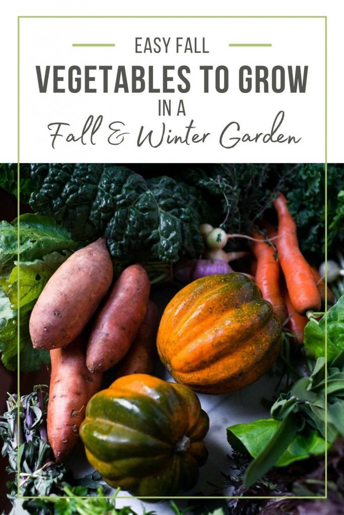 Sweet potatoes, acorn squash and carrots in a bunch with text that says easy fall vegetables to grow in a fall and winter garden